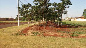 Reflorestamento-5