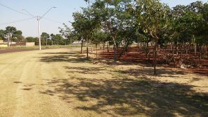 Reflorestamento-6